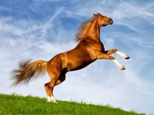 Vild hest i julegave